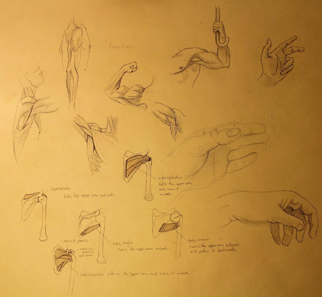 Gonne-Kuehl.com - Anatomie-Studien